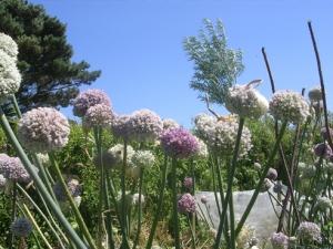 leekflowers